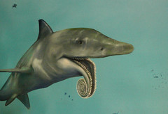 Helicoprion mural at the Las Vegas Natural History Museum