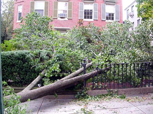 fallen_tree2_day