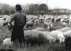 Pasqua. Easter (the bbp) Tags: people blackandwhite bw italy animals rural easter countryside italia sheep shepherd traditions fv5 bn persone campagna hp5 herd sheeps ilford bianconero animali biancoenero vicenza pasqua agnello pecore pastore veneto stolenshot tradizioni pecora schio rurale gregge thecontinuum topphotoblog a1f1 judgmentday54 sanvitodileguzzano thebbp
