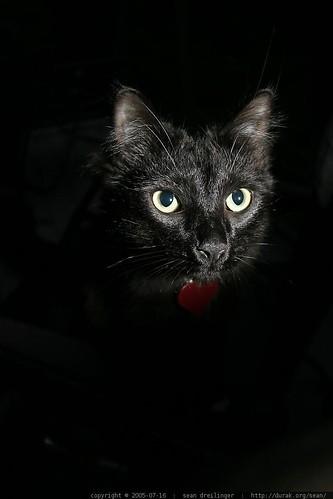 gambar kucing comel image1