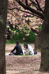 Couple (mrhayata) Tags: park japan cherry tokyo couple shinjuku 桜 日本 sakura 新宿御苑 gyoen 新宿区 カップル mrhayata