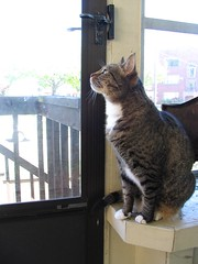 """Please let me out. I'll be good."" (litlnemo) Tags: cats tabby maggie catsandwindows"