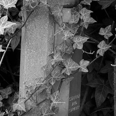 "ivy lamp post • <a style=""font-size:0.8em;"" href=""http://www.flickr.com/photos/87605699@N00/135573791/"" target=""_blank"">View on Flickr</a>"