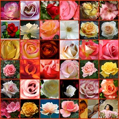 Roses (tollen) Tags: roses love rose hope drops rainbow fdsflickrtoys tears thankyou passion forgiveness lotsapeace