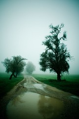 Uncertain beginnings (Victoriano) Tags: deleteme5 espaa mist tree deleteme4 green deleteme6 ford deleteme7 field car misty fog wow landscape arbol lost scotland spring spain bravo saveme4 saveme5 saveme6 moody 4x4 saveme3 path top spooky explore gps hdr eyecatcher beginnings pathfinder maverick helpme fordmaverick photodotocontest1 uncertainbeginnings flogr