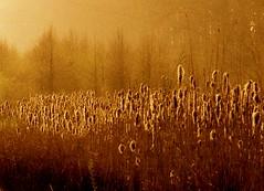 Vegetation (Harry Mijland) Tags: holland netherlands dutch nederland zon breukelen pluim dearharry pluimen harrymijland