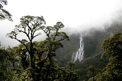 R- IMG_0219 (Sam's Exotic Travels) Tags: road newzealand tree fog waterfall nationalpark sam nz sams fiordland travelphotos bluelist wilmotpass samsays samsexotictravelphotos exotictravelphotos samsayscom nz101fiordlandnationalpark