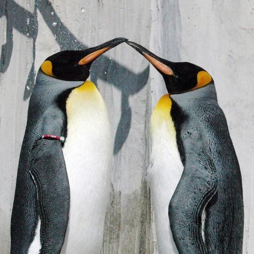 Beso pingüinil