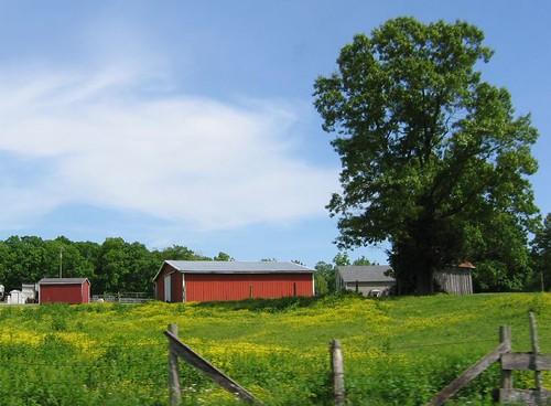 Farm scene, Bardstown, Kentucky