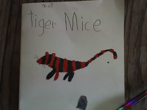 about tiger mice
