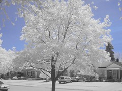 IR 3 (cloud.chaos) Tags: trees digital ir infrared streetscapes digitalinfrared allenpark cloudchaos