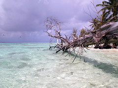 The clear waters of Saipan (rob surreal) Tags: ocean tree clear saipan