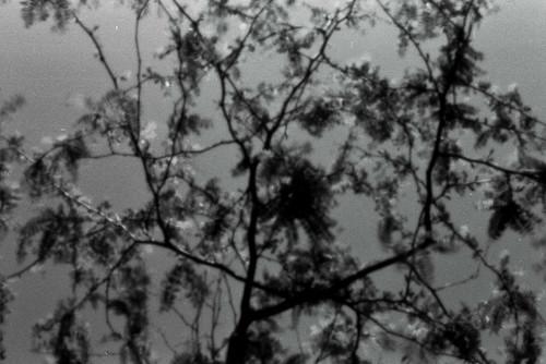 Pinhole Tree #1 @ COA