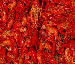 Crawfish Season (tigerebel3) Tags: deleteme5 deleteme8 food deleteme deleteme2 deleteme3 deleteme4 deleteme6 deleteme9 deleteme7 rouge louisiana eric deleteme10 crawfish seafood crayfish weeklysurvivor cajun baton boil crawdads cajunfood tigerebel3 ericlandry
