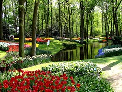 Keukenhof - largest Spring bulbflower garden in Europe (Coanri/Rita) Tags: holland garden europe tulips thenetherlands 2006 colourful publicgarden keukenhof bulbflowers lisse coanri impressedbeauty favoritegarden ccctd bulbflowergarden photofaceoffwinner thechallengegame challengegamewinner ispywinner