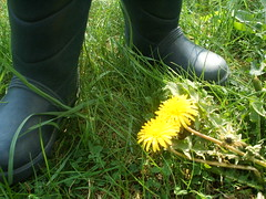 dandelion and boots