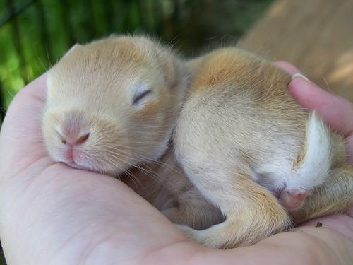Baby Bunny Poop!