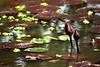 lotus (Farl) Tags: travel water colors river asia delta vietnam waters mekongdelta mekong mekongriver