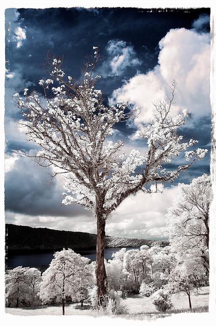 -= Ice Age =-