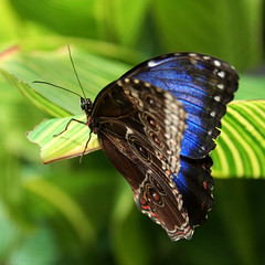 Butterfly (janinehealy) Tags: flowers blue light plants plant flower detail macro green slr nature leaves yellow closeup canon butterfly insect 350d rebel xt leaf wings wing butterflies insects dslr janine stratford butterflyfarm janinehealy specanimal stratfordbutterfyfarm bokehsonice commentsbest