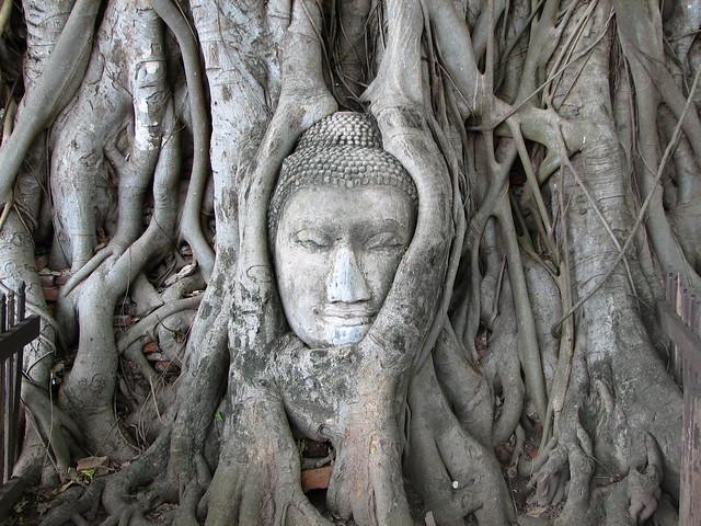 Thailand - Ayuthaya 5 - Buddha head