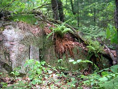 (Gemma Grace) Tags: ontario canada forest spring ancient granite ferns muskoka outcropping canadianshield winterbrowns