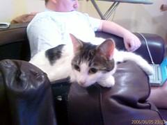 IMAGE_00104 (judey) Tags: cats kitten twinkle