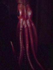 Liftshaft Squid (Kevan) Tags: red dark squid giantsquid liftshaft
