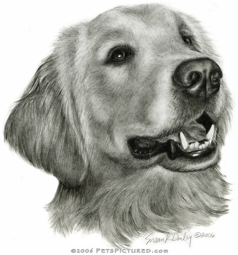 Flickriver: Photoset 'Dog Drawings' by Susan Donley