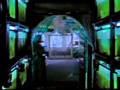 exotica (chunkysimon) Tags: fish tanks exotica fishtanks