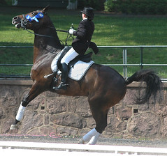 Dressage gone wild (Rock and Racehorses) Tags: horses nj gladstone dressage usef