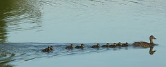 """Hey, Eight, dear, get back in line and .... (algo) Tags: water photo"