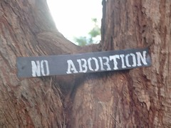 No abortion