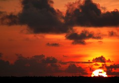 Gimme Red--                                          Sunsets at Kumarakom 2 (Anoop Negi) Tags: kumarakom pebbleslakeresort kottayam kerala alleppy sunset india ezee123 alleppey alappuzha backwaters httpezee123livejournalcom questfortherest kereala faces portrait landscape beautiful water sky land green yellow red uplifting moody sunrise river lake boat boatman oars blue clouds waterscape tourism promotion moods landmarks historical places location nature bird monument cloud gree amazing gorgeous exotic indian culture festival traditions color hues human men women girls girl people travel essay journey photo best photograph picture anoop negi anoopnegi bestphotographer photography