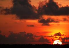 Gimme Red--                                          Sunsets at Kumarakom 2 (Anoop Negi) Tags: kumarakom pebbleslakeresort kottayam kerala alleppy sunset india ezee123 alleppey alappuzha backwaters httpezee123livejournalcom questfortherest kereala faces portrait landscape beauti