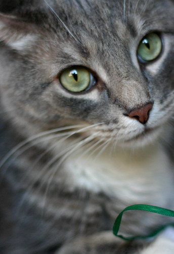 cat spay and neuter fort collins