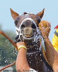 Ahhhhhh! (Rock and Racehorses) Tags: interestingness nj july explore fourseasons jockey horseracing thoroughbred racehorses monmouthpark oceanport interestingness465 i500 123nj animalpals