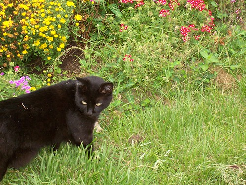 Spite in garden