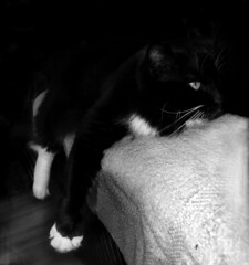 How I Feel (Shawn's Kitty (Busy Healing!)) Tags: bw cat kitty tuxedo feelings cc200 cc100 flickrcatsblog bestofcats