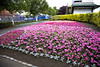FLOWER BED IN PEOPLES PARK, DUN LAOGHAIRE
