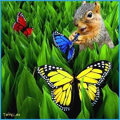 Butterfly Fantasy (Terry_Lea) Tags: butterfly squirrel squirrels fantasy photoshopfun fantasizing tbas wonderingwhatthatwouldfeellike