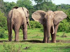 Safari in Mole
