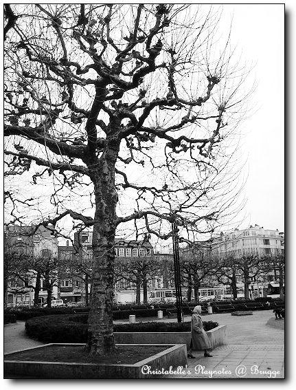 車站前的樹木