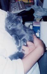 Mauser as a kitten!
