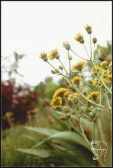 YELLOW (ThiefofMoments) Tags: analogico cursofotografia