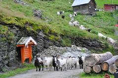 Vikesland, Norway