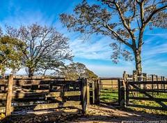 Entre o Galpo e a Mangueira.. (My delirium ) Tags: blue sky tree nature field clouds landscape shot natureza paisagem cu campo rvore riograndedosul pampa campanha