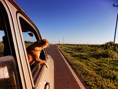 Vilu de viaje (Lucas Jaeger) Tags: pets dogs argentina puppy perros cachorros ruya villaguay