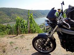 Vine, Rhine and everything fine (Rob de Hero) Tags: vineyard vine motorbike triumph motorcycle rhine rhein wein weinberg motorrad motorcycletrip motorradtour speedtriple 955i oberwesel perscheid