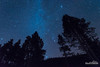 Reaching Pines (kevin-palmer) Tags: bighornmountains bighornnationalforest wyoming nikond750 tokina1628mmf28 astronomy astrophotography night sky stars starry clear blue dark winter december solstice pine trees highway14 snow orion sirius pleiades astrometrydotnet:id=nova1869461 astrometrydotnet:status=failed
